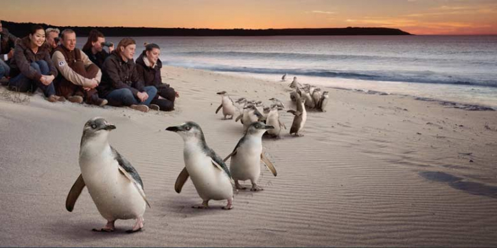 Favorite Melbourne & Phillip Islands + Penguin Parade