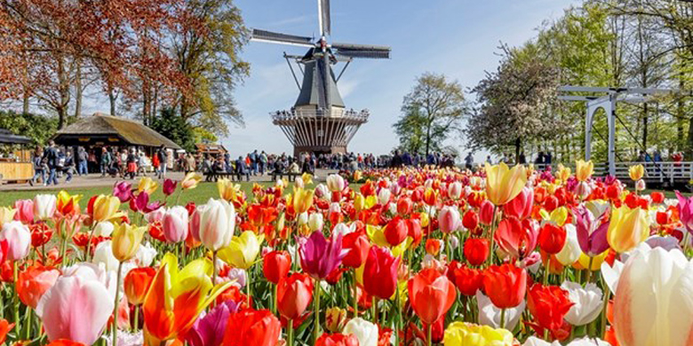 Super Sale Mt. Titlis & Keukenhof