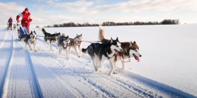 Amazing Northeast Usa + French Canada & Haliburton Dog Sled