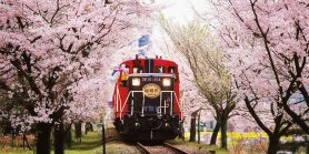 Lihat Kyoto Romantic Train
