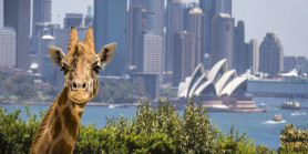 Relaxing Australia Dreamland + Taronga Zoo