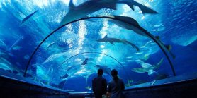 Favorite Sydney Aquarium & Wildlife Park + Madame Tussauds