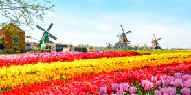 Favorite West Europe + Titisee & Keukenhof